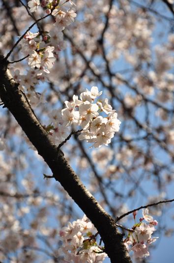 hikiji_2.jpg