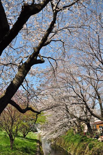 hikiji_3.jpg