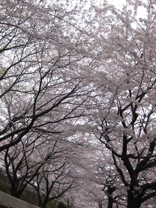 hikijigawa-1.jpg