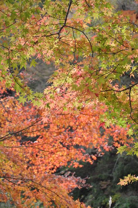 tanzawa_2.jpg