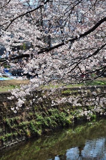 hikiji_1.jpg