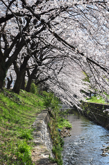 hikiji_4.jpg